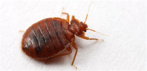 bedbug pest india
