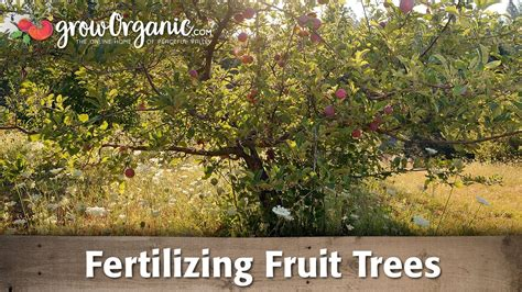 fertilizer for fruit trees fertilizing fruit trees