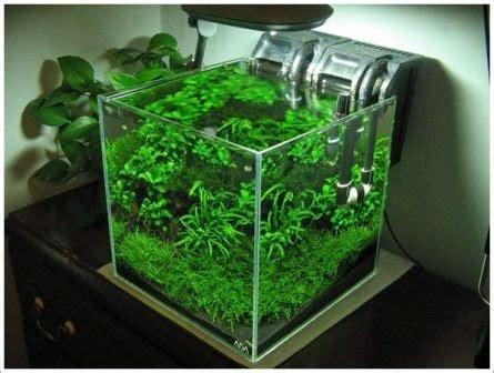 membuat aquascape murah  sederhana dunia akuarium