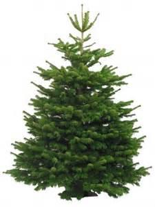 weihnachtsbaum arten weihnachtsbaum vergleich