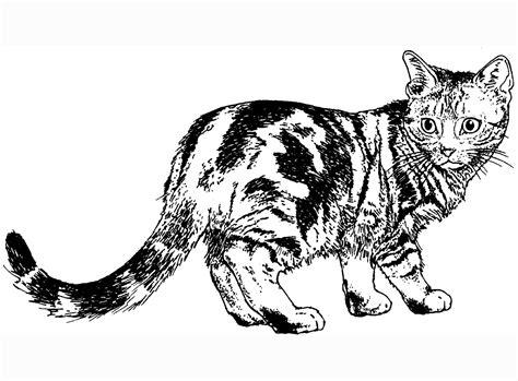 black and white coloring pages of cats free coloring pages of cat black and white