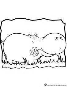 hippo printables hippo coloring page coloring home