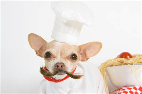 dogaware.com articles: introduction to homemade diets for dogs