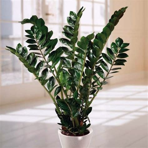 Houseplants That Don T Need Light by What Indoor Plants Need Little Light Interior Design
