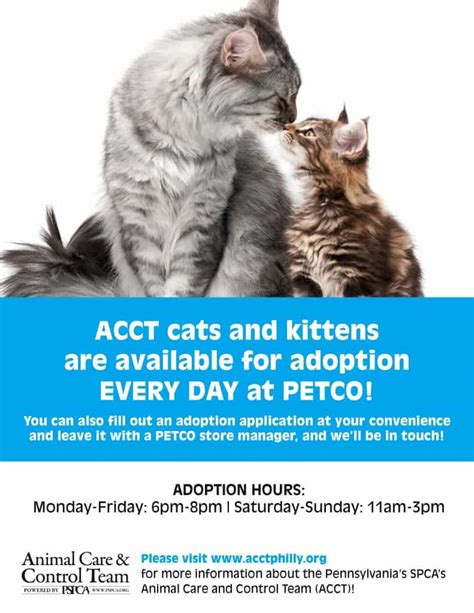 petco adoption acct begins cat adoptions at new petco in andorra this weekend acct philly
