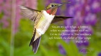 hummingbird desktop background weneedfun