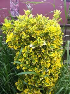 yellow and green bush mainichi dokodemo photography
