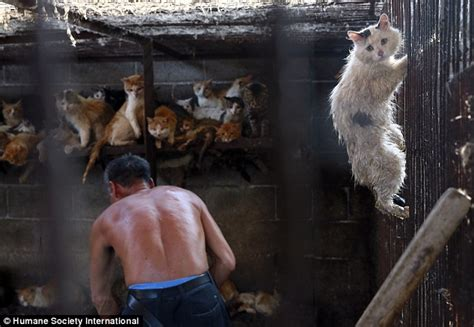 Day Kopi Ready To Drink Pet inside china s annual yulin festival where dogs and cat are eaten daily mail