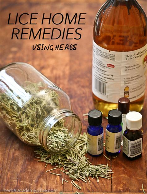 herbal academy lice home remedies using herbs herbal academy