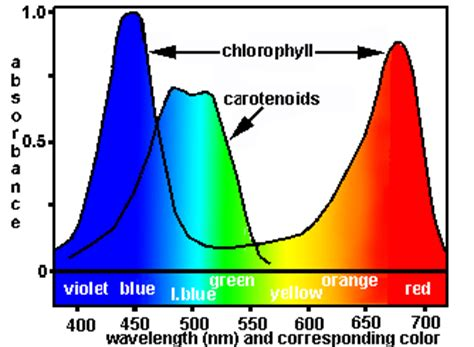 what color has the most energy 101 photosynthetic pigments biology notes for a level