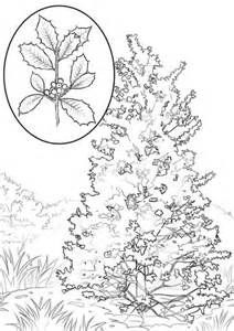 elm tree coloring page elm tree coloring coloring pages