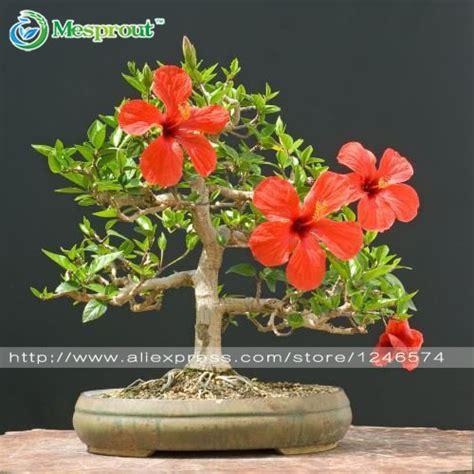 alibaba cus alibaba グループ aliexpress comの 盆栽 からの 100盆栽ハイビスカスsyriacus花