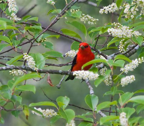 the bird garden natural landscaping gardening and