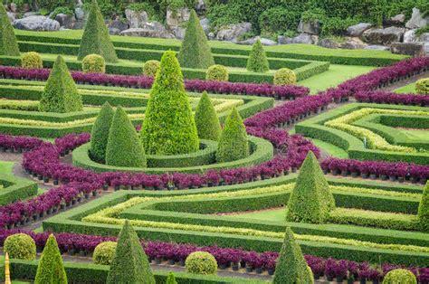 zierpflanze baum tropische landschaft im natur garten - Garten Zierpflanze
