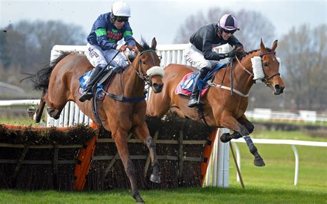 doodlebug wetherby chelmsford tips mise en odds wetherby preview