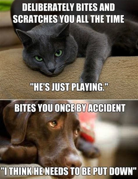 Dog And Cat Memes - cats and dogs funny meme and gif jpg 550 215 717 all