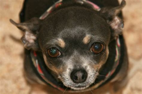national puppy mill rescue about us national mill rescue autos post