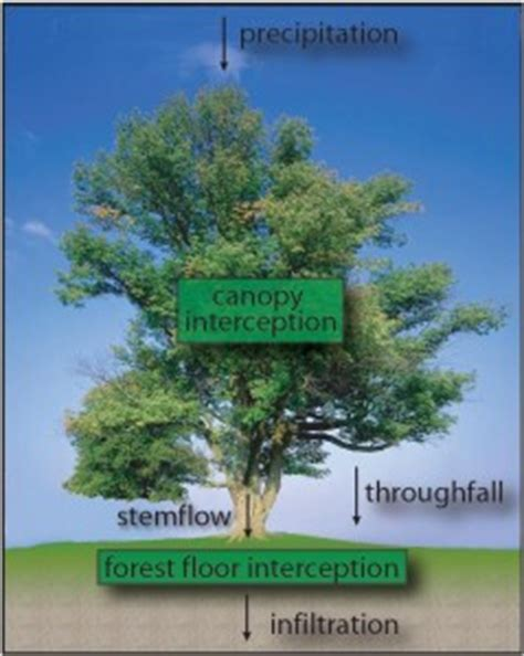 Canopy Definition Rainforest Effect Of Forest Trees On Fertility Of Underneath Soil