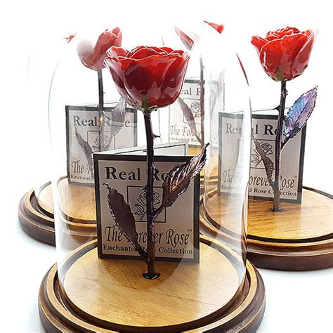 forever rose in glass dome beauty and the beast forever rose collection known as the