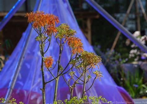 san francisco flower garden show photography at san francisco flower garden show