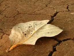 11 Ibadah Yang Mengantarkan Hidup Sukses 1 2012 171 majlis sunnah