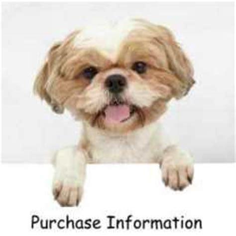 shih tzu puppy supplies miracle shih tzu