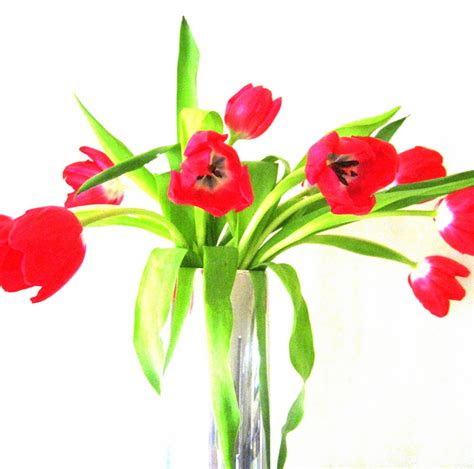 Vase With Tulips by Easy Centerpiece Ideas Featuring Affordable Plants