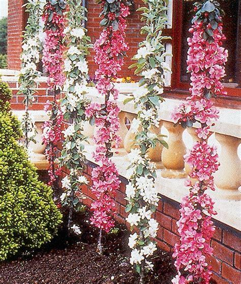 Pink Flower 4in1 grobe s nursery and garden centre newest fruit