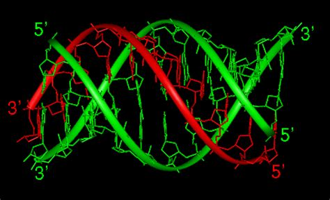 triple helix dna dna loop and water effects on stability of triplex dna