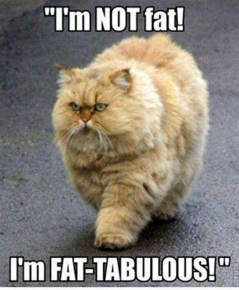 Random Cat Meme - random funny pictures 18 pics fat cat funny pinterest
