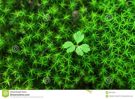 Cool Small Palnts To Grow Small Plant Growing From Moss Green Background Stock Photo