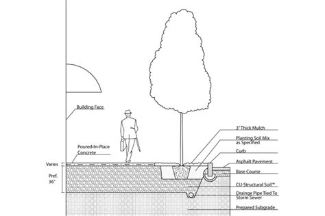 section of a tree structural soil part 2 the field