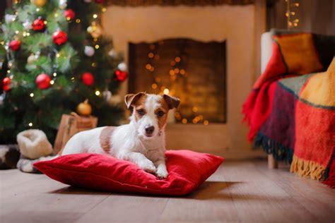 hund zuhause begraben tipps f 252 r ein entspanntes weihnachten mit hund stories