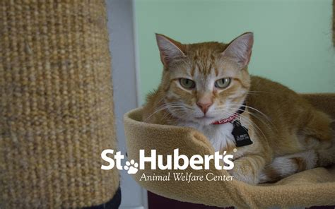 st huberts therapy st hubert s animal welfare center