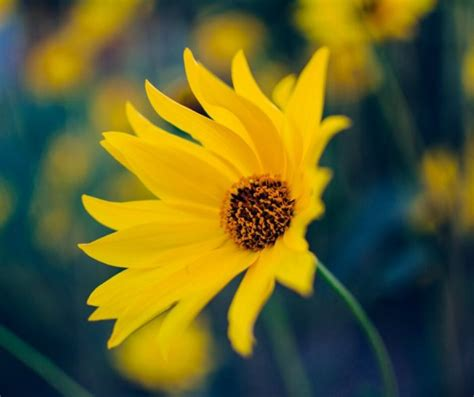 fiori di co immagini fiori immagini e foto da condividere sapevatelo
