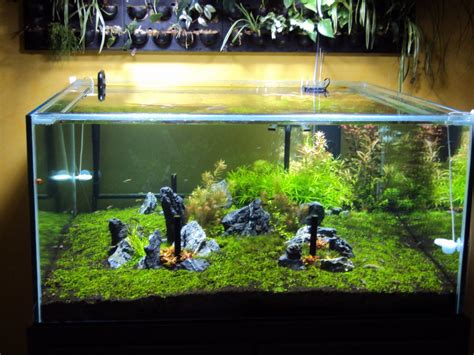 led aquarium lighting orphek planted tank lit by