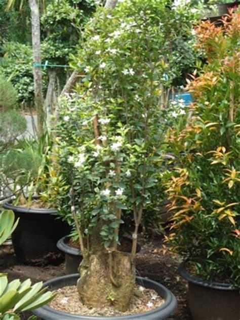Jual Bibit Anggrek Tangerang jual tanaman bandung tanamanbaru