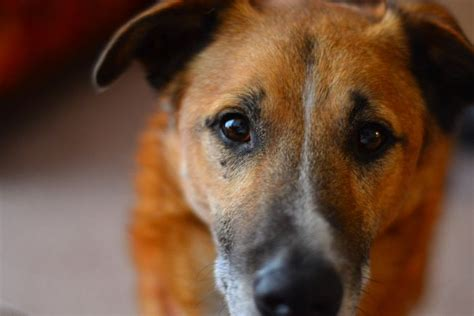 can dogs tell when your dogs really can smell your emotional state mnn nature network