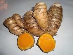 Vitamin Ayam Petelur Herbal manfaat tumbuhan herbal alami definisi herbal dan