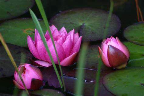 Garten Blumen 1093 by Blumen