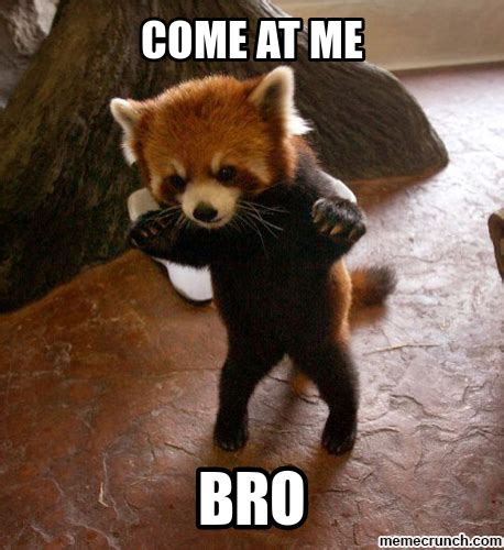 Red Panda Meme - come at me red panda