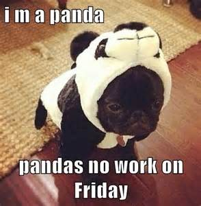 Dog Friday Meme - 71 best images about funny friday dogs on pinterest