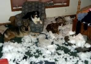 Sofa Donation Destructive Dogs And Chewing Pet Samaritans