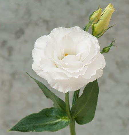 fiori bianchi matrimonio fiori bianchi idee organizzazione matrimonio forum