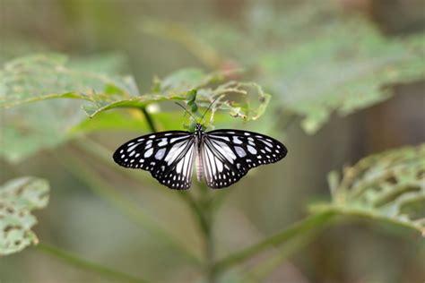 gambar kupu kupu hinggap  bunga  indah  lucu