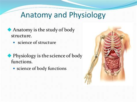 study guide for the human in health and illness 6e books anatomy and physiology of the human pdf priorityden