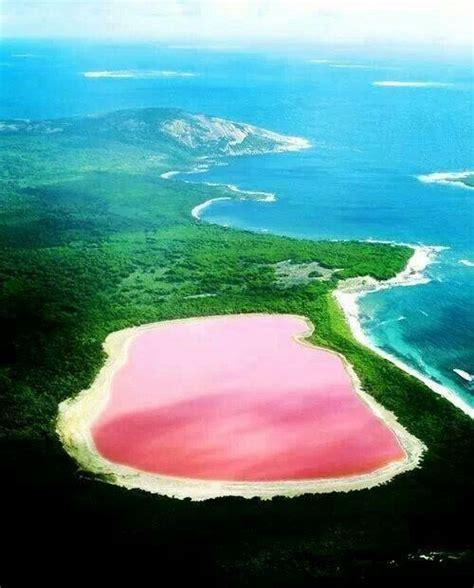 pink lake australia pink lake australia nature animals outdoor beauty