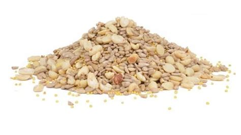 shell free medley seed mix 5 lb the bird store and more