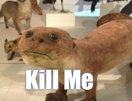Kill Me Meme - memes