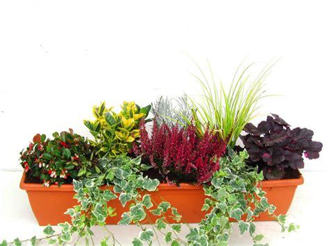 Pflanzen Bestellen 1016 pflanzen bestellen pflanzen bestellen